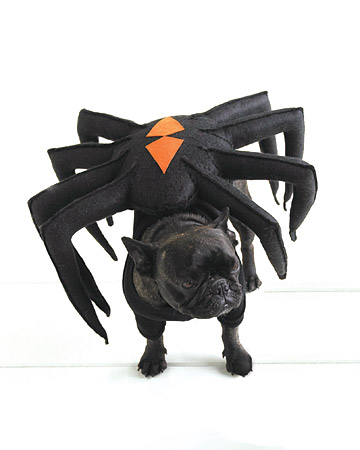 I am NOT a spider! Go bother someone else!