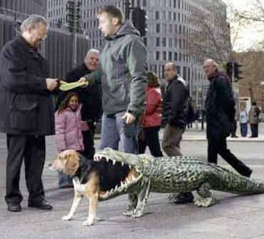 Can you please get this alligator off my @#$?!
