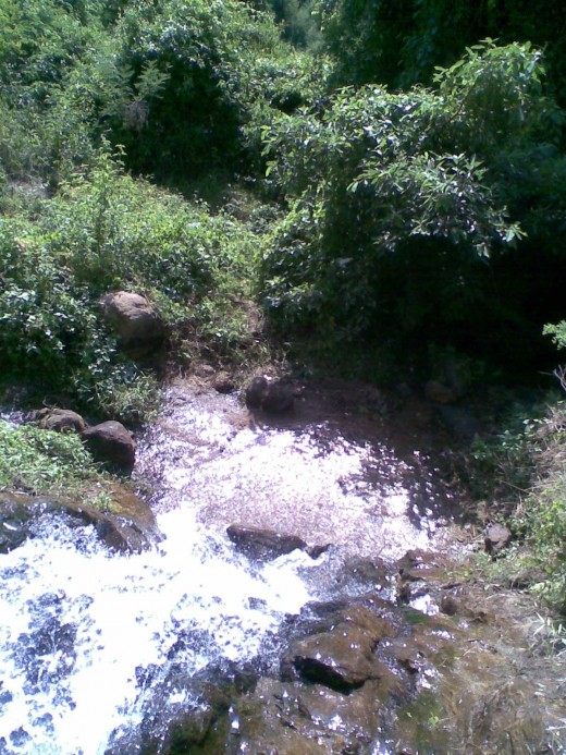A Stream in Valparai