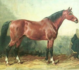 A bay horse may be dark bay, or brown, with black points -- mane, tail, and lower legs.