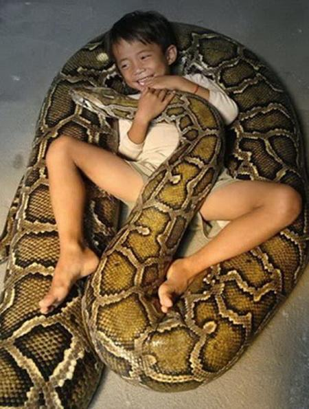 Pet Anaconda
