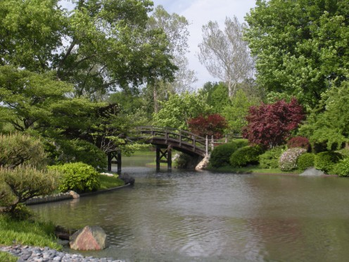 Photo 6 - Look at the color of the burgundy or maroon colored Japanese Maples in this garden setting.  They add so much color and contrast.