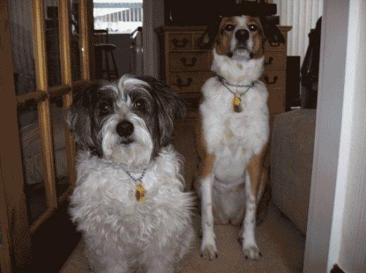 Jessie and Leo