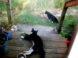 Tux and Dot, enjoying the sunshine.