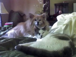Knut (Neo) all grown up, with his doggie brother Toby.