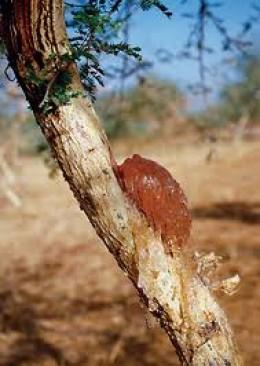 Gum arabic resin