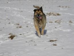 Snow Traveler (photo by Vicki Parker)