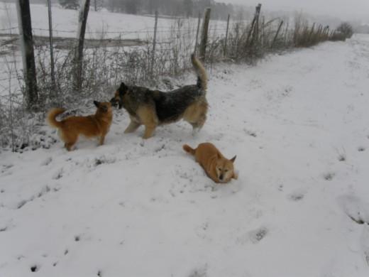 Dog's Play (photo by Vicki Parker