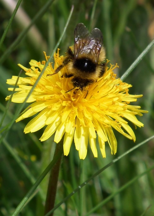 Bee Natural/Bee Love