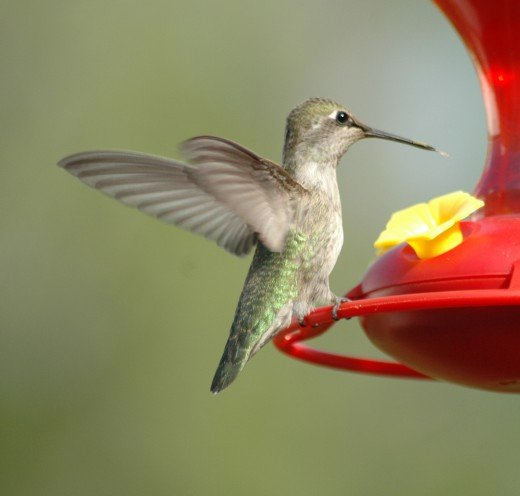 Our hummingbirds left about two weeks ago.