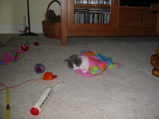 """We took the """"knot"""" out of the blanket and wrapped her in it! She was (and still is) a cutie!"""