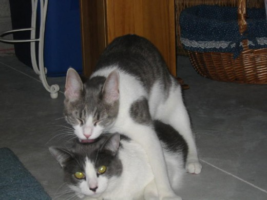 """My favorite picture of Misty giving Dixie a """"kiss"""" on the top of her head! :) She will still try this from time to time, but it ends up with good natured swatting at one another!"""