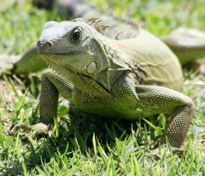 October 21st- Reptile Awareness Day