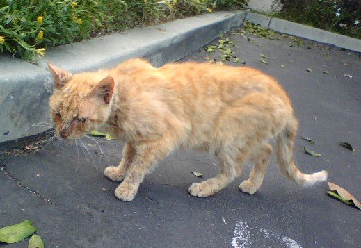 Tommy, domestic or feral cat?