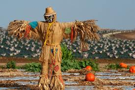 TOM SELLECK would make a great scarecrow, but one problem. Most females would flock to the pumpkin patch to talk to him.