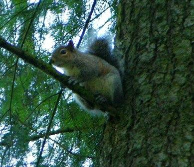 MR. SQUIRREL, YOU'RE NOT FOOLING ANYONE WITH YOUR SWEET SMILE. YOU ARE JUST WAITING FOR A CHANCE TO RAID OUR BIRD FEEDERS AND FLOWER BEDS.