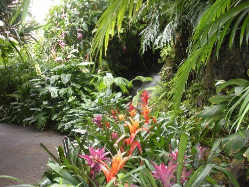 Photo 4 - A Tropical Garden filled with bromeliads.