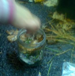 Step 5: Place a layer of fallen leaves over the fern and pine needles.