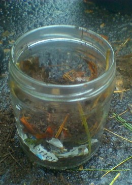 Step 6: Place a top layer of soil, then add the worms.