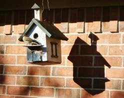 Garden Treasures ~ Our Backyard ~  Houston Pictures