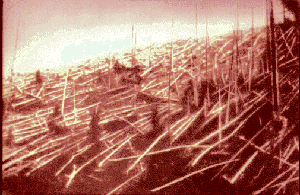 Trees affected by the explosion