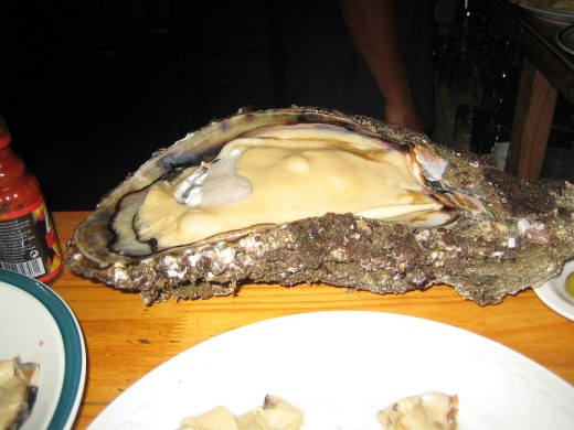 Giant Oyster From Angola