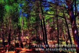 Pine-tree forest Makarska Croatia