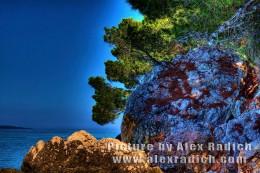 Pine-tree sea Makarska Croatia