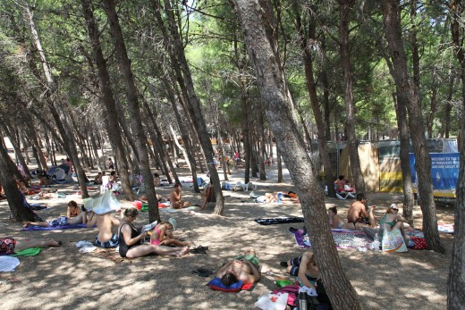 Pine-tree Area of Zlatni Rat Beach