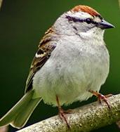 A Little Bird, with a Big Heart