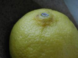 The lemon tree song