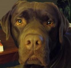 Dog Sense; Priceless!