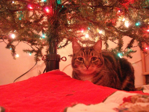 Kitty loves Christmas!
