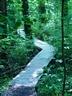 Battle Creek Cypress Swamp