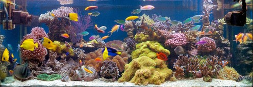 A large saltwater reef display.