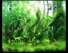 A beautifully planted freshwater aquarium.