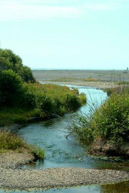 Serpentine Ocean River