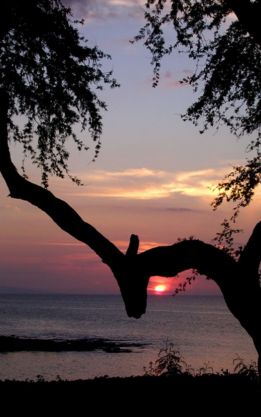 Under the Napili Bough Red Sunset