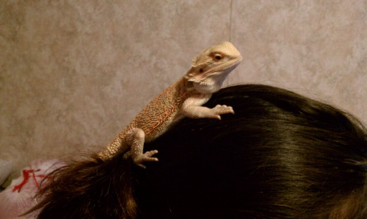 Winks likes to climb onto my head and hang out there. It feels very funny.