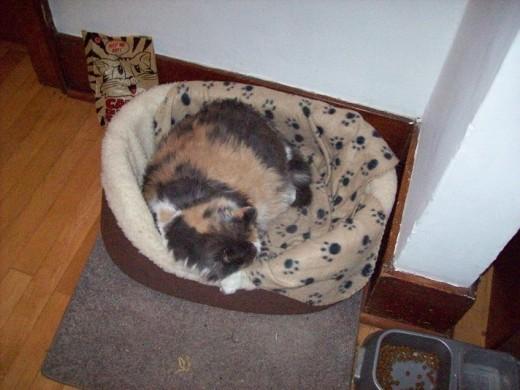 Lindsay Sleeping In Her Bed