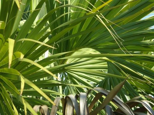 Palm Circle - Photography by Vicki Parker