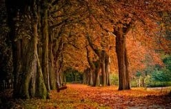 Autumn Is Now Upon Us