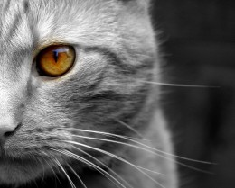 Cats Have Expressive Eyes