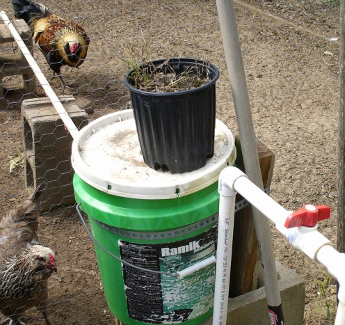 Automatic chicken watering system made from PVC pipe, shut off valve, 5-gallon bucket, & poultry nipples.