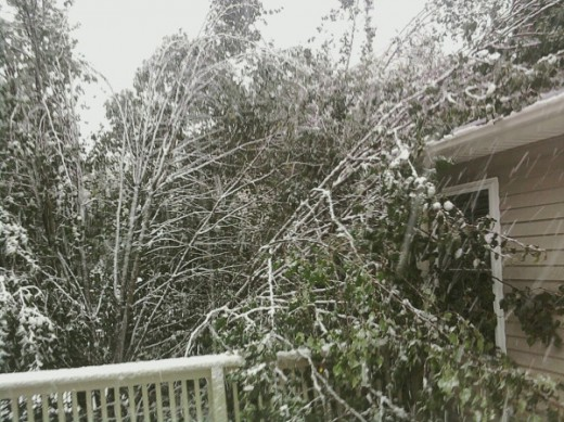My next door neighbor's, who happens to be my Aunt, pear tree split from the weight of the snow falling on the back deck and corner of the house. things only going to get worse