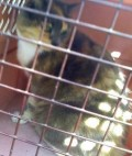 Gorgeous in a carrier after she was trapped