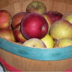 Recipes for Using Up Extra Apples