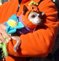 """In response to Linus Van Pelt's quote about the Great Pumpkin: """"I don't care about the Great Pumpkin. I'd rather have a little pumpkin just like this cute doggie."""""""