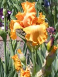 Bright Orange Colored Flowers Gallery - Flowers to Consider