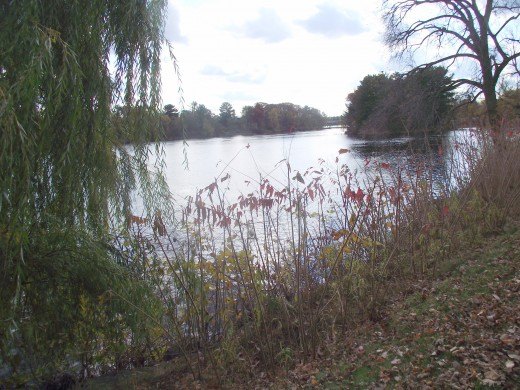 Wisconsin River with Willow tree in foreground. Taken in autumn 2011